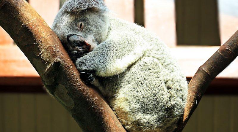Schlaf gut und gesund mit Selbsthypnose